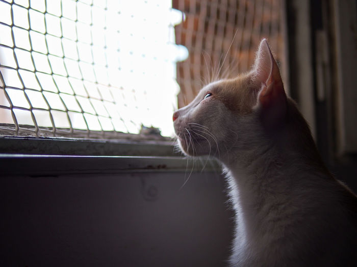 Close-Up Of Cat Looking Through Window Against Sky