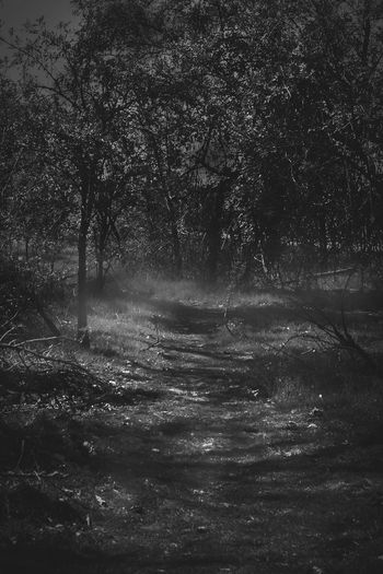 Black & White Halloween Halloween_Collection Spooky Atmosphere Spooky Trees Spooky Things SpookyHalloween Beauty In Nature Black And White Black And White Photography Blackandwhite Blackandwhite Photography Landscape Outdoors Spooky Spooky Forrest Spooky Photo Spooky Places Spooky Tree Tree WoodLand