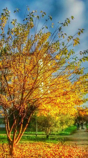 TreePorn Colors Of Autumn Yellow