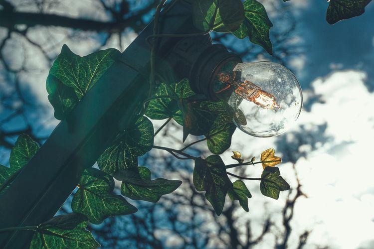 2019 Niklas Storm April Light Blub Electricity  Lamp Branch Leaf Sky Close-up My Best Photo