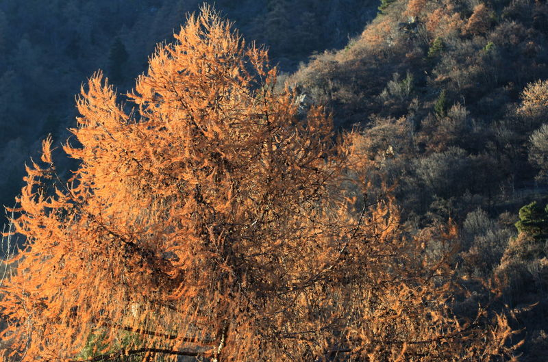 100mm Autumn Colors Day December 2015 Forest Nature No Snow  Outdoors Rabland,sudtirol Wintertime