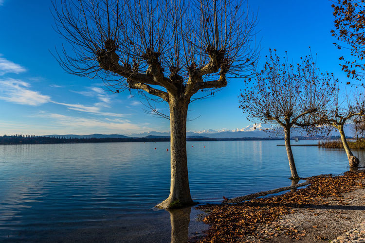 What a lovely lake view Bare Tree Beauty In Nature Blue Blue Sky Branch Day EyeEm Best Shots EyeEm Nature Lover Lake Landscape Leaves Mountains Nature No People Outdoors Reflection Scenics Single Tree Sky Sky And Clouds Sky_collection Tranquility Tree Tree Trunk Water