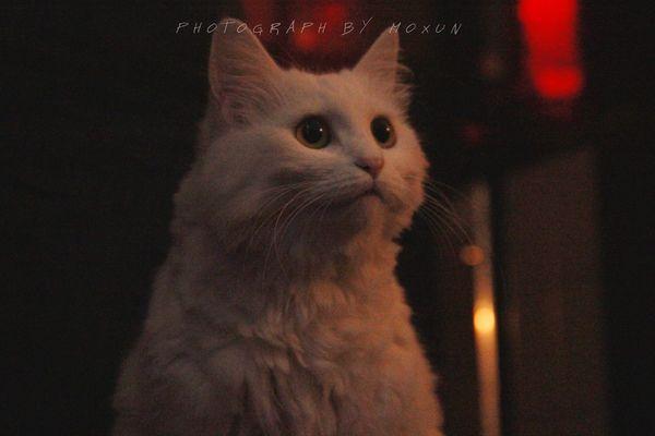 Cat 一年前的佳宝www现在胖了好几圈