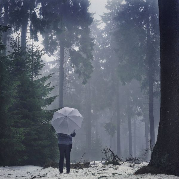 On a Winter day... Forest Trees Winter Umbrella One Person Weather One Woman Only Adults Only Only Women Full Length Adult Shades Of Winter
