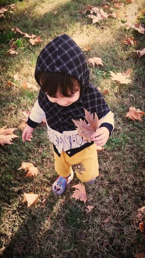 Childhood Playing Real People Child High Angle View Day Autumn Autumn Leaves Autumn Colours Autumn Mood Autumun 2017 Autumn Leafs Leaf 🍂 Leafs Photography Autumn🍁🍁🍁 🍁🍂autumn 🍁 🍂 🍁 🍂 🍃 🍁🍂🍁Fall 🍁autumn 🍁 🍂🍁👢autumn 🍂Fall🍁 🍂 Fall Sunshine Baby Baby Photography