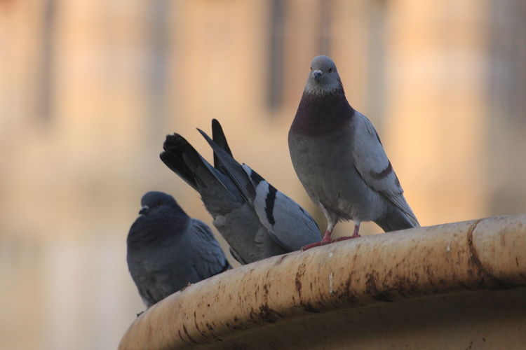 Low angle view of pigeons perching