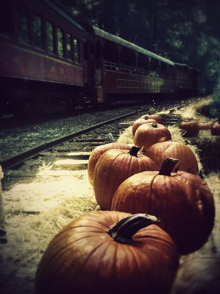 Transportation Railroad Track Train - Vehicle Rail Transportation Random Acts Of Photography Willits California Countryside Mendocino County Skunk Train Willits California To Fort Bragg California Pumpkinpatch Pumkins Halloween_Collection Halloween2017 Nature No People Train Ride