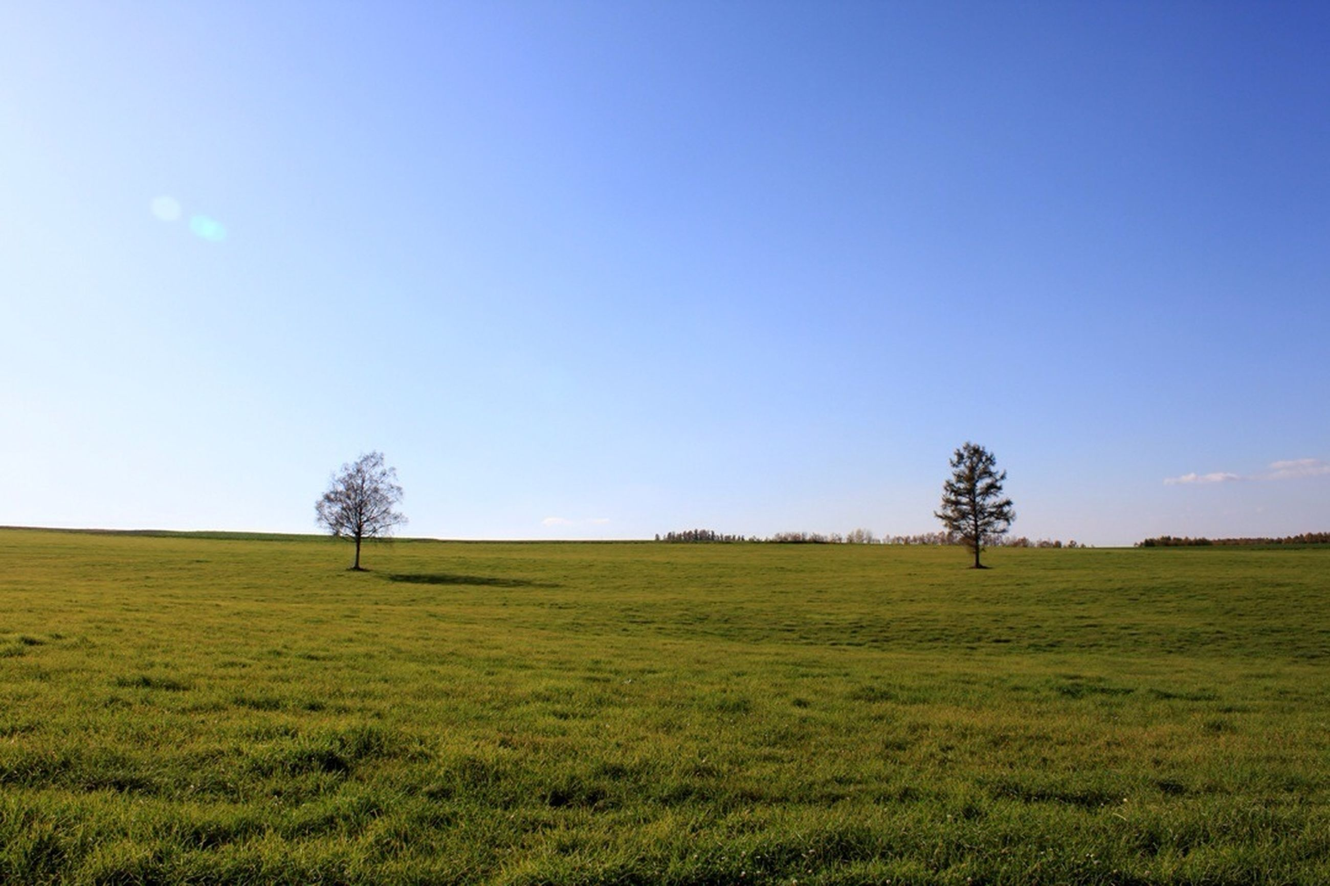 grass, tree, tranquility, clear sky, landscape, tranquil scene, field, blue, copy space, scenics, beauty in nature, nature, grassy, growth, sky, bare tree, horizon over land, green color, non-urban scene, idyllic