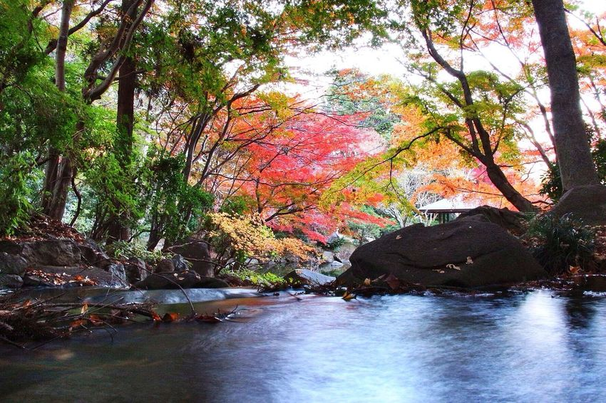 """Introducing Culture Of Japan Which Must Be Left To The Future…… """"未来に残す日本の文化"""" 紅葉 Slow Shutter EyeEm Nature Lover"""