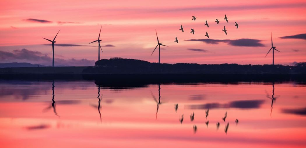 Wind turbine edit Nikon Nikonphotography Reflection_collection Green Energy Renewable Energy Windturbines Wind Sunset Sky Water Reflection Beauty In Nature Lake Silhouette Tranquility Bird Animal Themes Scenics - Nature Animals In The Wild Cloud - Sky Nature Vertebrate Animal Wildlife No People Animal Tranquil Scene Outdoors