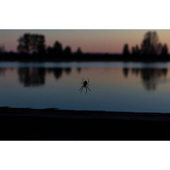 A lot of people may not like spiders but I love the colors that came out with the silhouette! Spider Silhouette Steveston Richmond vancouver vancity vancouver bc photography sunset