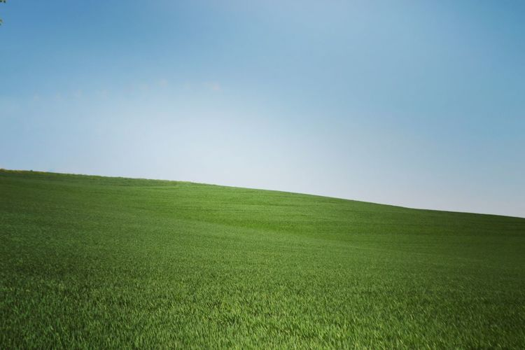 Win Window Windows Green Color Outdoors Tranquil Scene Clear Sky Sky Agriculture Landscape No People Summer Horizon Over Land Beauty In Nature P9plus Leica Italy❤️ Photo Italia Asti Green Color Grass Nature Rural Scene Field