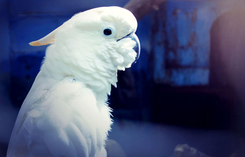 Bird in my adventure Nature Photography Animals In The Wild Beauty In Nature Bird Bird White Birds_collection Blue Blurred Background Close-up Nature No People One Animal Outdoors White Color EyeEmNewHere