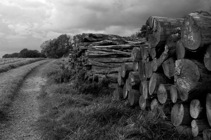 Blackandwhite Nature Wood Black & White