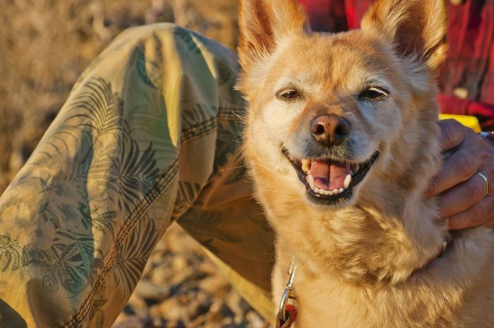 Dog's happy face 🌌 Looking At Camera Animal Themes Portrait Mammal Mouth Open One Animal Dog Domestic Animals Outdoors Close-up Pets Day Happy Face Hand One Man And His Dog Yellow Mixed Breed Light Sunny Day Sunny Afternoon
