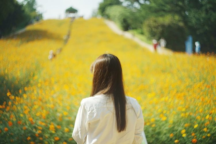 Rear view of woman standing on yellow flowers field