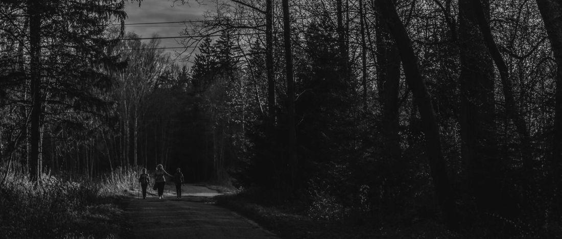 Beauty In Nature Blackandwhite Forest Landscape Road Scenics Slender SlenderMan Tranquil Scene Tranquility Tree