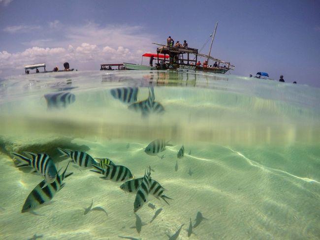 Zanzibar Beach Snorkeling Sea Boat Excursion