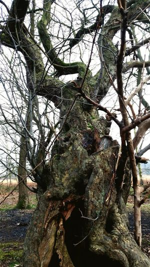 Old Knarly Tree EyeEm Nature Lover