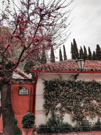 spring blossom in Granada Spring Blossoms Flowers SPAIN Springtime Coral Colored Tree Sky Architecture Creeper Botanical Building Residential Structure Historic Exterior Residential Building Residential District Settlement Branch Creeper Plant