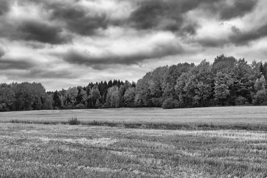 Agriculture Black & White Black And White Blackandwhite Cloud - Sky Countryside Exceptional Photographs EyeEm Best Shots - Black + White Field Grassy Landscape Majestic Monochrome Monochrome Photography Nature Non-urban Scene Remote Rural Scene Scenics Sky Solitude Tranquil Scene Tranquility Tree WoodLand
