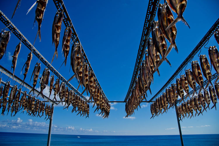 Drying fishes on the shelf in Lanyu (Orchid Island ), Taiwan Meal Seafood Taiwan Travel Blue Clear Sky Dry Drying Fishes Festival Fishing Food Frame Island Lanyu Outdoors Shelf Sky Sun Taitung Traditional Stories From The City