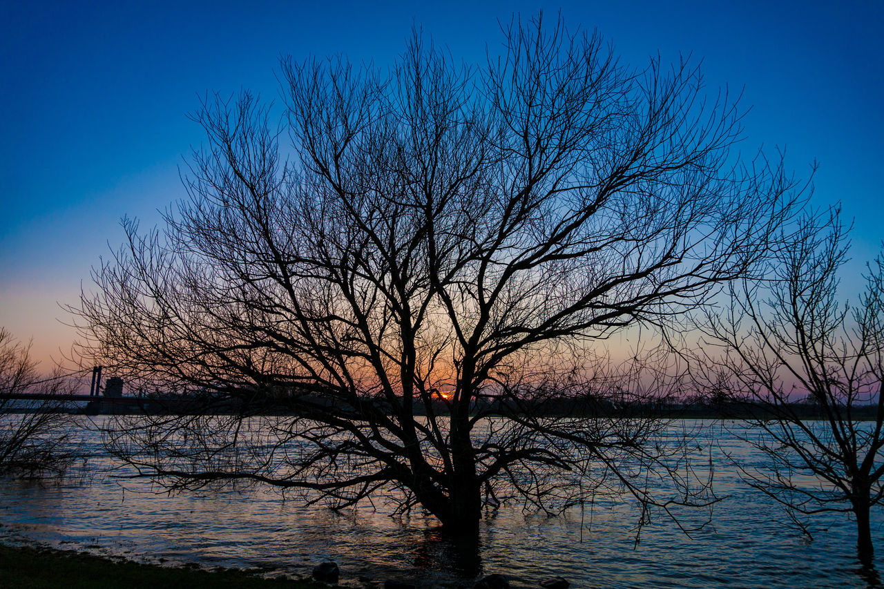 bare tree, tree, water, tranquility, sky, beauty in nature, nature, tranquil scene, lake, silhouette, scenics, sunset, branch, reflection, outdoors, waterfront, blue, no people, day