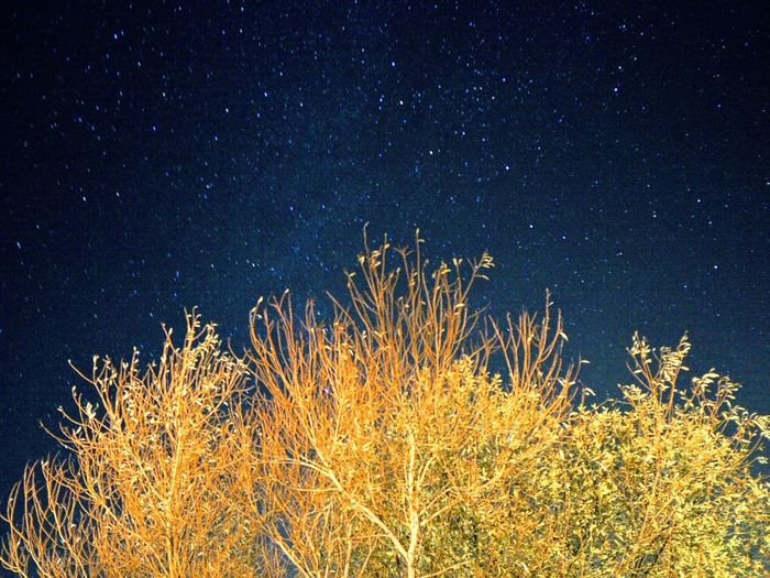 Earth reaching the heavens above Astronomy Galaxy Space Milky Way Star - Space Constellation Tree Star Field Illuminated Star Trail
