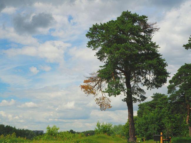 tree Nature Day Blue Tree