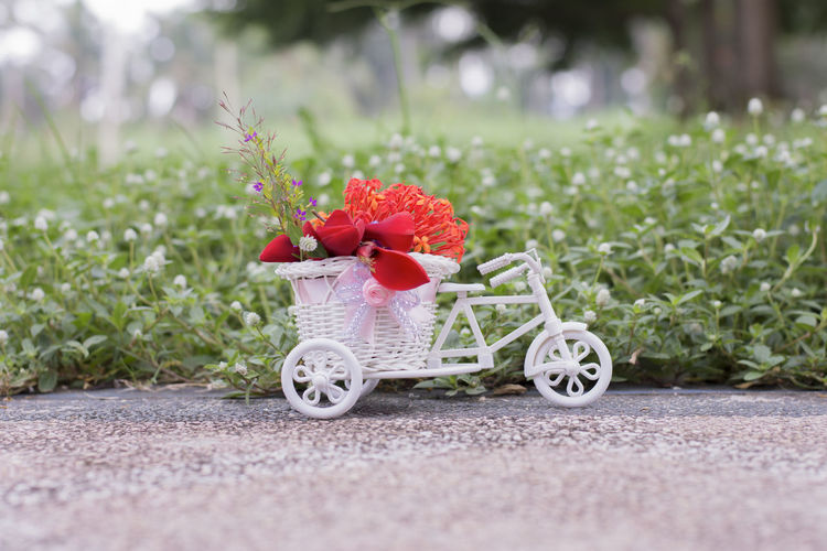 Flower delivery bike, Greeting cards Plant Flower Selective Focus No People Flowering Plant Nature Day Red Grass Freshness Transportation Outdoors Green Color Growth Basket Beauty In Nature Fragility Surface Level Vulnerability  Close-up Wheel Greeting Card