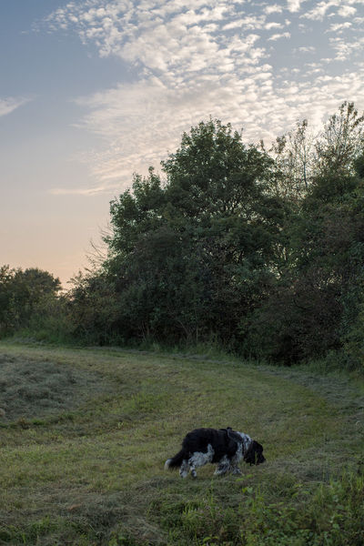 Evening Walk With Beginning HDR-Addiction 50 Mm Before Sunset Evening Light HDR Animal Themes Cloud - Sky Day Dog Domestic Animals Evening Full Length Grass Handheld Hdrphotography Mammal Nature Near Sunset No People One Animal Outdoors Pets Sky Summer Day Tree