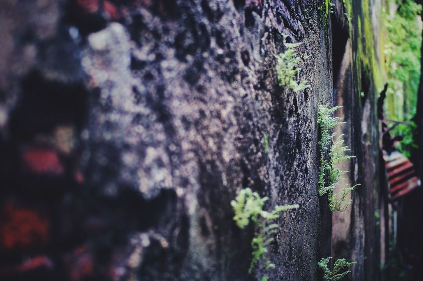No People Day Plant Selective Focus Trunk Nature Growth Beauty In Nature Sunlight Close-up Tree Trunk Outdoors Pattern