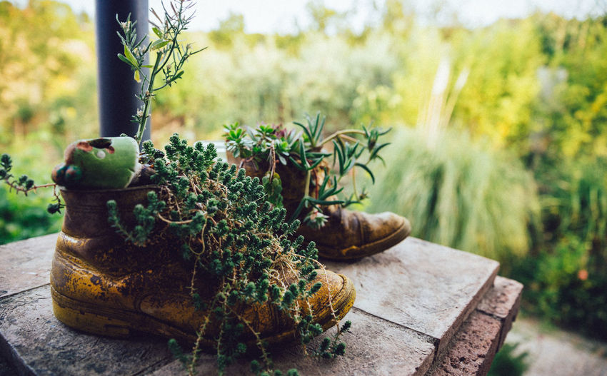 Repurposed Creativity Lifestyle Old Fashioned Plants Rustic Shoe Beauty In Nature Creative Day Food Freshness Green Color Growth Leaf Nature Outdoors Plant Planter Plants And Flowers Pot Potted Plant Repurposed Shoes Tree