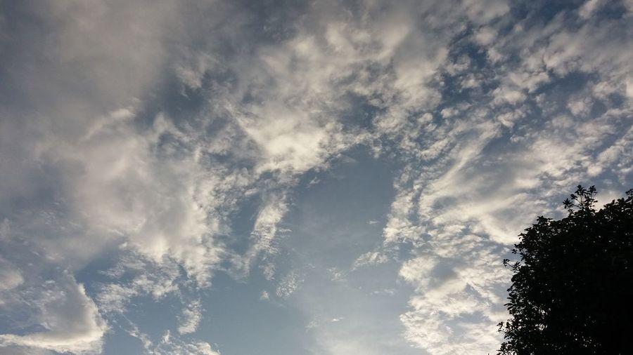 ☁☁🍃 Thailand Low Angle View Light Evening Tree Sky Cloud - Sky