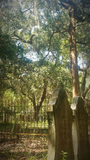 Cemetary Cemetery Beauty Cemeteryscape Cemetaryshots Cemetery Photography Gravestones Graveyard Low Angle View Tranquil Scene Green Old Headstone Daylight Iron Fence Scenics Solitude Remote Trees Spanish Moss Tree Wrought Iron Fencing