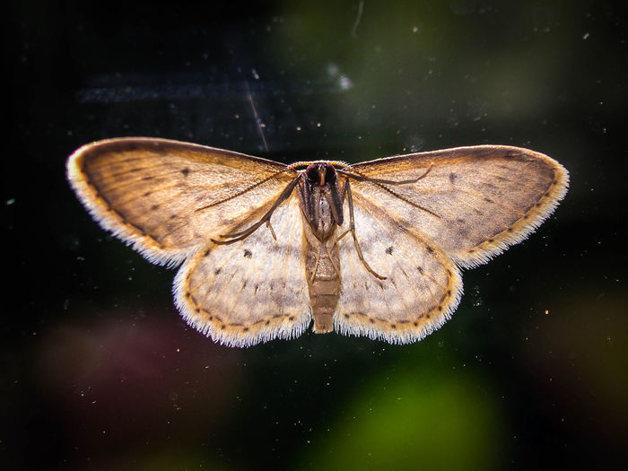 Close-up of moth against blurred background