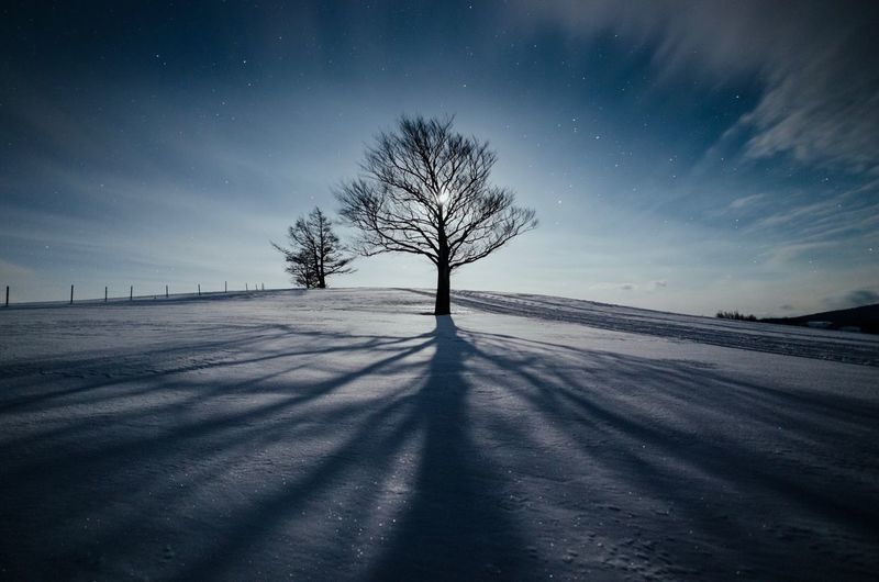 Tree Snow Star - Space Cold Temperature Winter Nature Bare Tree Night Sky Long Exposure Landscape Back Lit Clear Sky Field Star Field Beauty In Nature Scenics Moon Silhouette