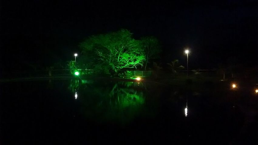 Night Illuminated Tree Sky Reflection Night Photography Nightsky Nature_collection Nature Nature Photography Flowers, Nature And Beauty Relaxing