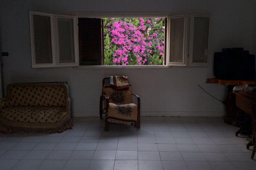 Sommergefühle Flower Indoors  Window Living Room Fushia Green Plant Nature Egypt égypte EyeEmNewHere EyeEm TOA 2017