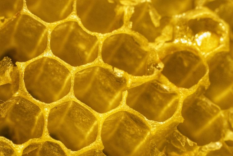 Backgrounds Full Frame Gold Colored Yellow Close-up Hexagon Honeycomb Beehive APIculture Bee Honey Colony Honey Bee Geometric Shape Pattern Textured  Shiny Repetition Rough