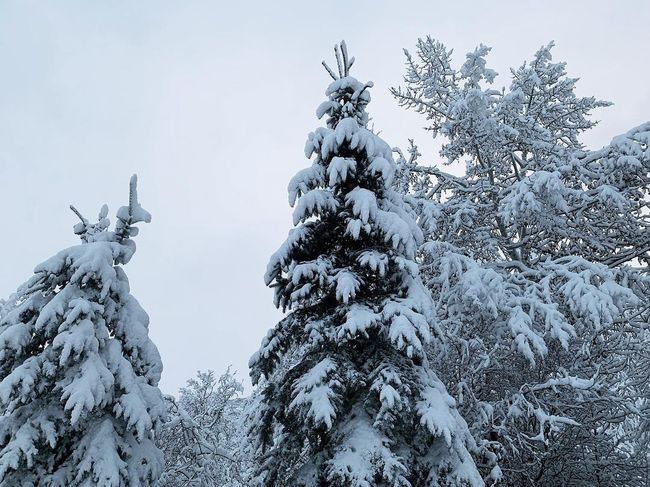 early morning. 15-20 inches of snow in 48hrs. ❄️🏔 Park City, Utah Iphonexs Utah Wasatch Back Wasatch Mountains Snow Winter Tree Plant Cold Temperature Sky Beauty In Nature