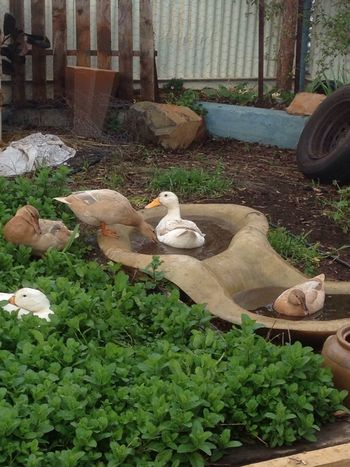Permaculture example