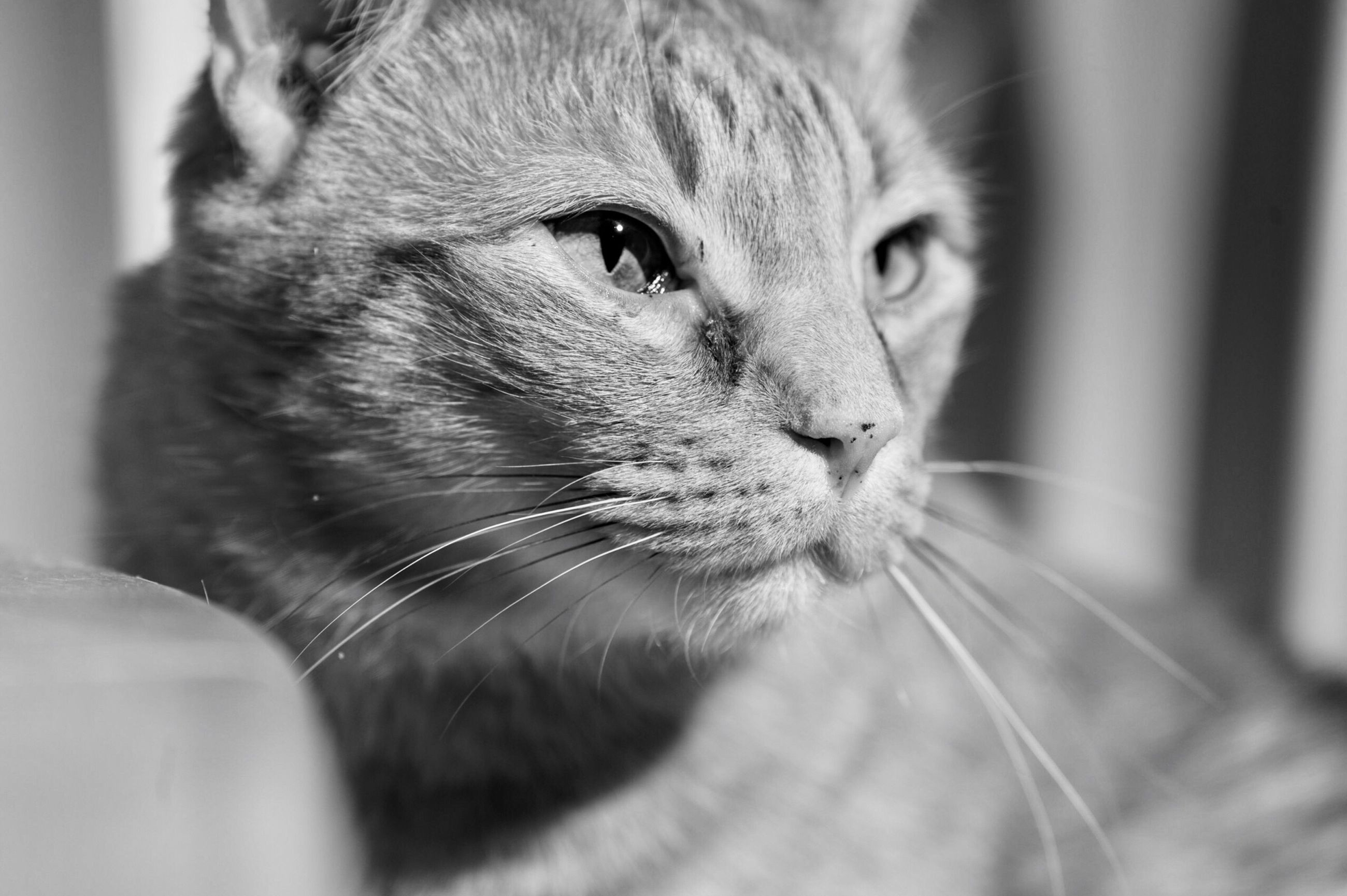 one animal, domestic cat, animal themes, domestic animals, pets, mammal, whisker, close-up, feline, no people, indoors, day
