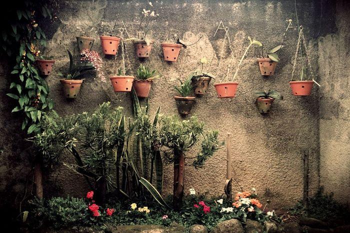 Garden Jardim Garden Wall Flowers Flower Wall
