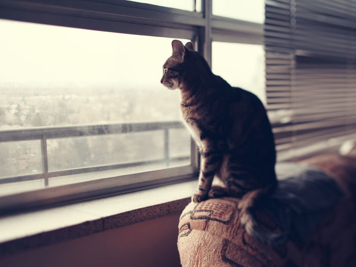 Cat sitting on couch sofa at home looking through window. kitten pet home alone.