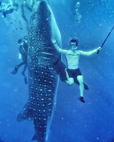 A wonderful sensation swimming experience with whaleshark Underwater Exploration Adventure Snorkeling Blue People Sea Sea Life Vacations The Great Outdoors - 2017 EyeEm Awards Whaleshark EyeEmNewHere Live For The Story Whalesharks Deepsea Biggestfishinthesea Seacreature Bigfish Rare Moment Rare Animal Rare Species