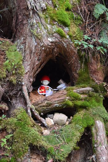 #serenity  #Religion #japan Rock - Object Rock Formation Nature Forest Adventure Cave Tree Outdoors Beauty In Nature Vacations Leisure Activity Day Red Cliff Moss