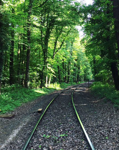Beauty In Nature Colors EyeEm Nature Lover Follow Forest Green Green Color Growth Köln Landscape Lush Foliage No People Non-urban Scene Outdoors Railroad Track Reflection Spring Stadtwald  The Way Forward Tracks Train Tracks Tranquility Tree Tree Trees