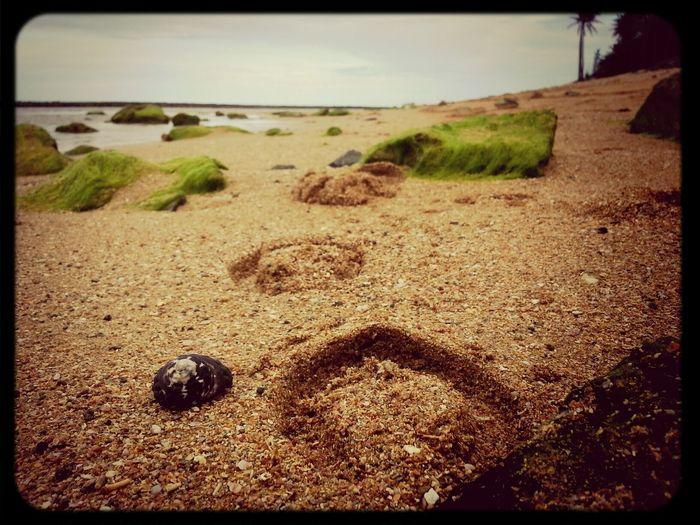 Beach Sand Seashell