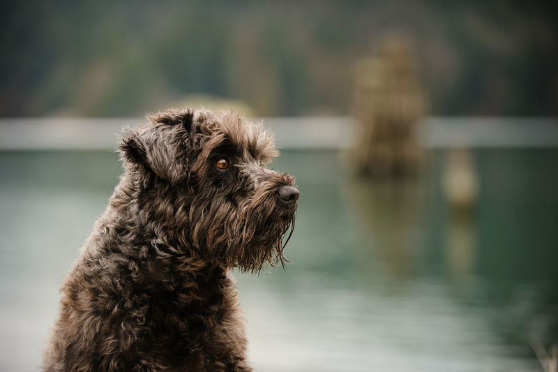 Close-up of dog against water